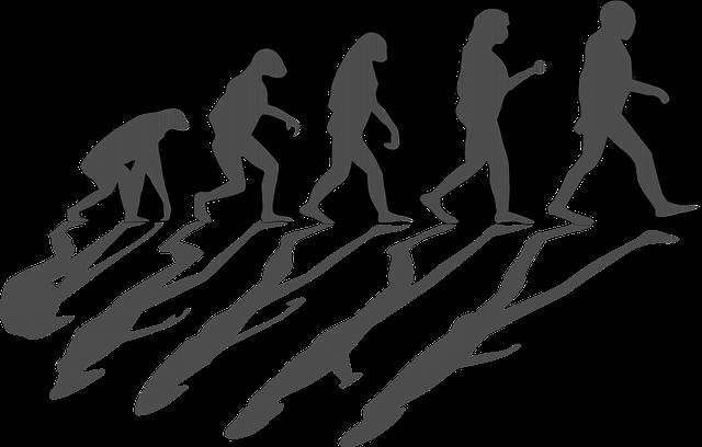 evolution-1295256_640